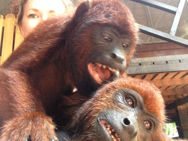 peru_monkeys